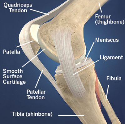 patellofemoral-diagram